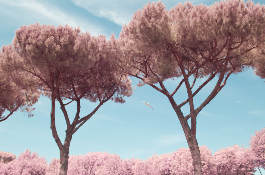 I-Photographed-Rome-in-infrared-579af9b09bb75__880